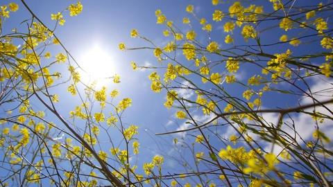 Nature -- 6 Facts to Show Your Spring Savvy
