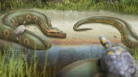 Eons -- How a Hot Planet Created the World's Biggest Snake