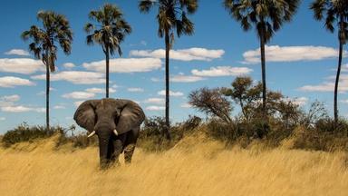 Okavango: River of Dreams - Limbo - Preview