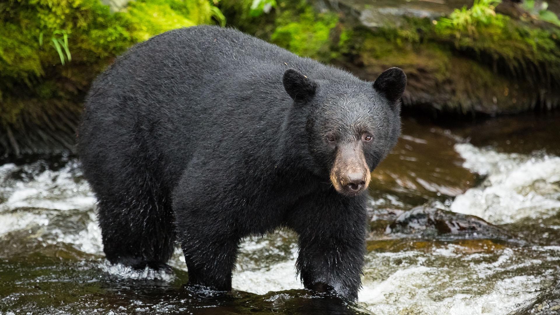 Wild Alaska Live Episode 2 | Full Program
