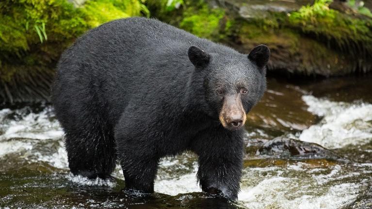Wild Alaska Live: Episode 2