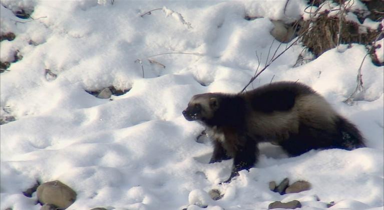 Outdoor Idaho: Working for Wildlife