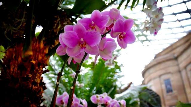 Orchids: Amazing Adaptations