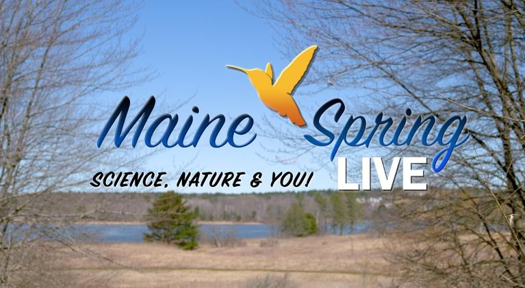 Maine Public Original Productions: Maine Spring LIVE: Wildlife, Nature, and You