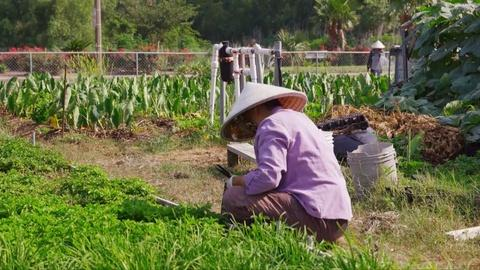 No Passport Required -- Bringing Traditional Vietnamese Farming to New Orleans