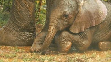 Elephants Struggling Through Drought