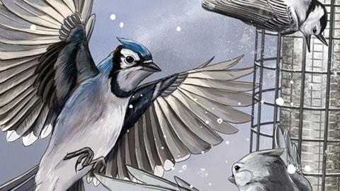 Nature -- Bird Cams Lab Crash Course - English