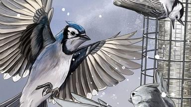 Bird Cams Lab Crash Course - English