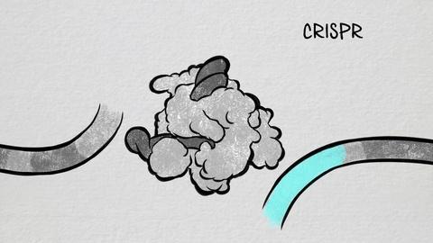 The Gene Doctors -- What is CRISPR?