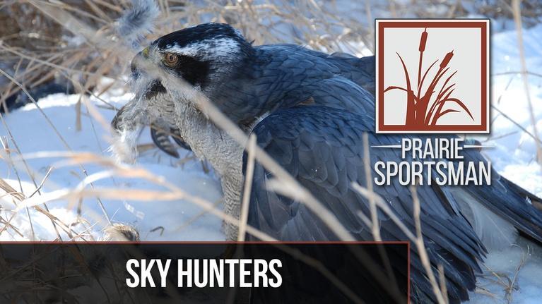 Prairie Sportsman: Sky Hunters