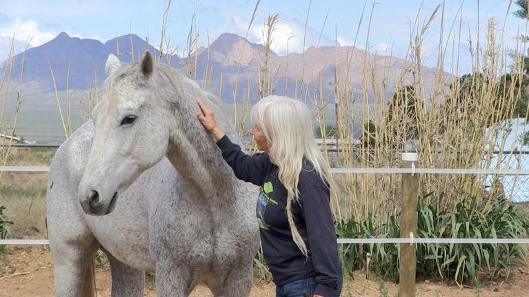 Community Connection: Dharmahorse Equine Sanctuary