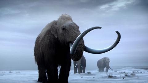 NOVA -- Bringing Back Woolly Mammoths
