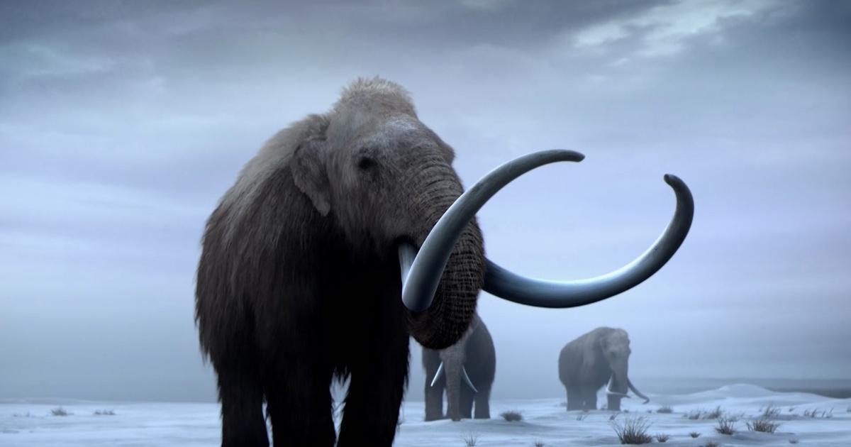 Nova Bringing Back Woolly Mammoths Season 45 Episode 105 Pbs