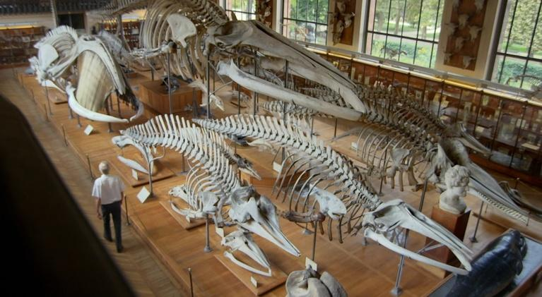 When Whales Walked: Journeys in Deep Time: When Whales Walked: Journeys in Deep Time   Teaser