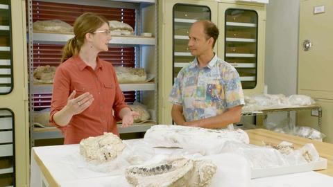 Prehistoric Road Trip -- The Value of Fossils