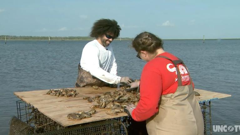 SciTech Now North Carolina: Oyster Farming, Stormwater Runoff, and Parking Technology