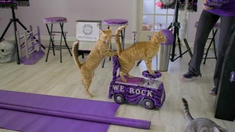 NOVA -- Are Cats As Easy to Train as Dogs?