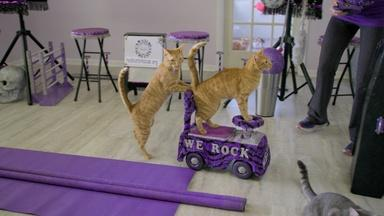 Are Cats As Easy to Train as Dogs?