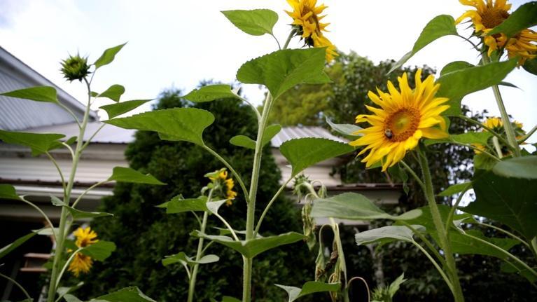 Assignment: Maine: Living Off The Land - Summer Garden Tour