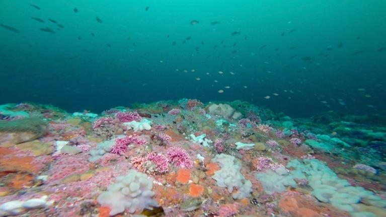 Changing Seas: The Cordell Bank: A National Treasure - Trailer