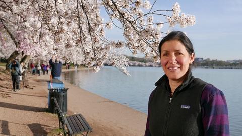 S18 E17: Cherry Blossoms, Mount Rushmore   Ask TOH