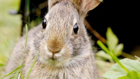 S38 E14: Remarkable Rabbits - Preview