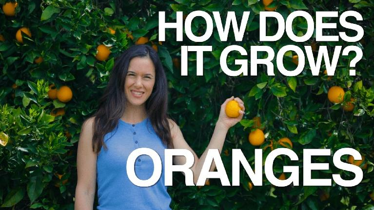 How Does It Grow: Oranges