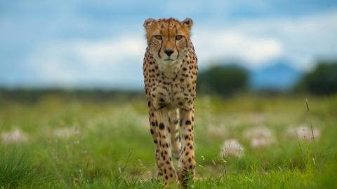 S36 E9: Animals with Cameras | Episode 2