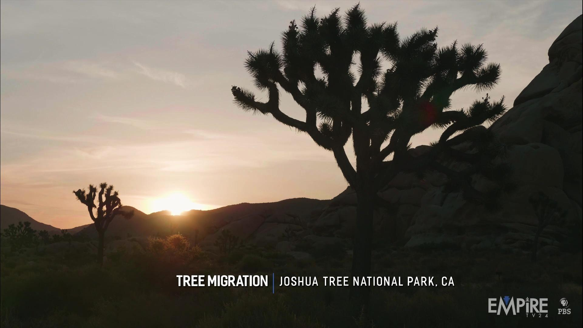 Joshua Tree Migration