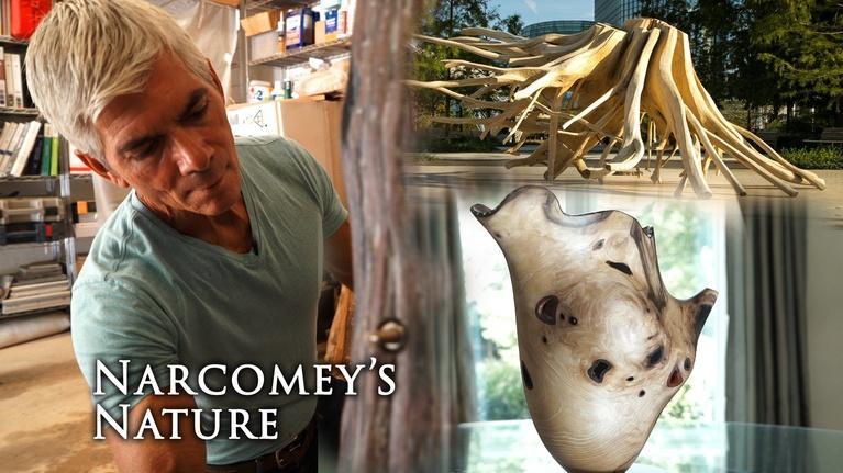 Gallery America: Narcomey's Nature