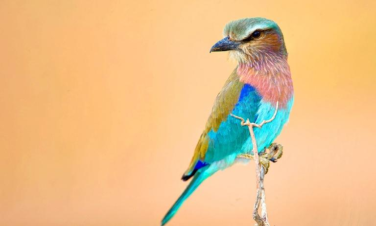 To the Ends of the Earth: Birds of East Africa