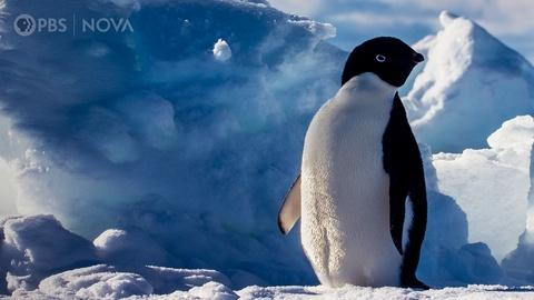 Antarctic Extremes -- Antarctica's Penguins Taught Us Surprising Life Lessons