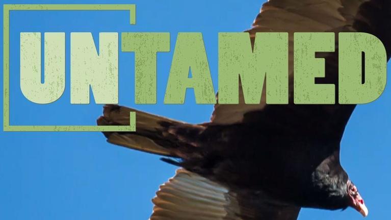 Untamed: Untamed: Vultures