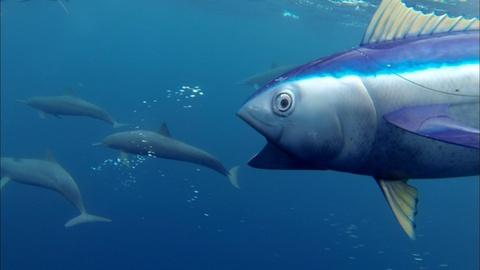 Nature -- S35 Ep16: Spinner Dolphins Captured by 'Spy Tuna'