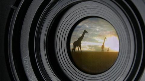 NOVA -- Animal Espionage Preview