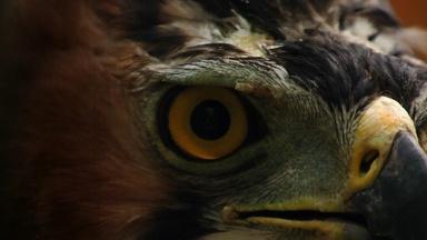 How Sharp are an Eagle's Eyes?
