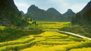 China's Yellow Fields