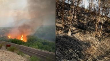 Life After Wildfires, from Australia to the West Coast