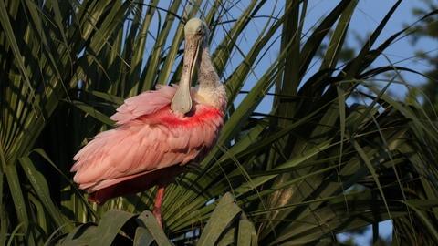 Nature -- Wild Florida