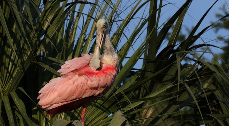 Nature: Wild Florida