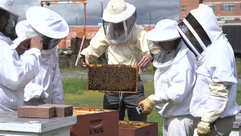 Safeguarding Honey Bees