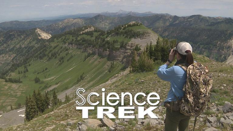 Science Trek: Mountain Goats: How to Count Mountain Goats