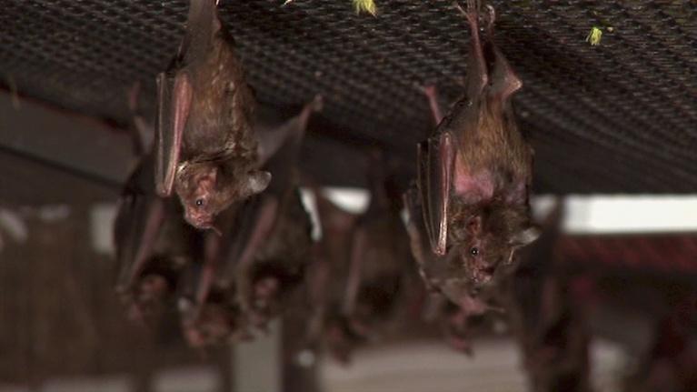Discovering Alabama: Bats