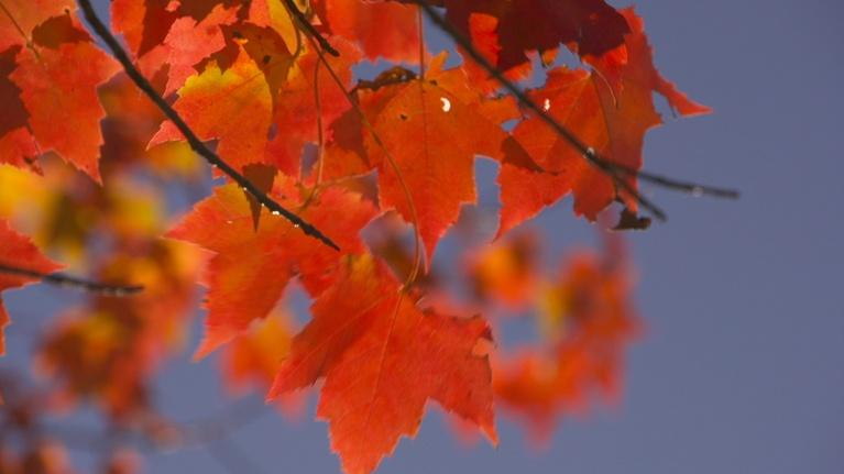 A Maine Sense of Place: Autumn in Maine