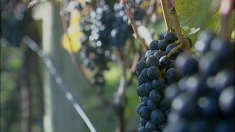 Our Ohio: Our Ohio: Ohio River Wines