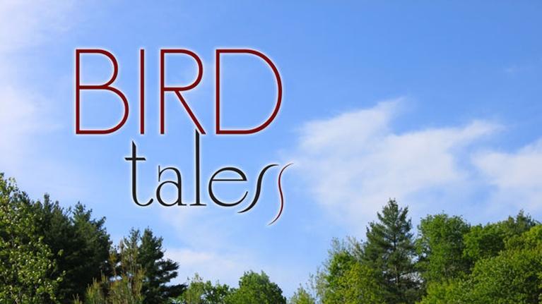 Bird Tales: Bird Tales