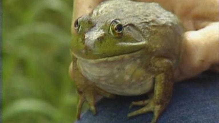 Up Close & Natural: Frogs, Toads, and Salamanders