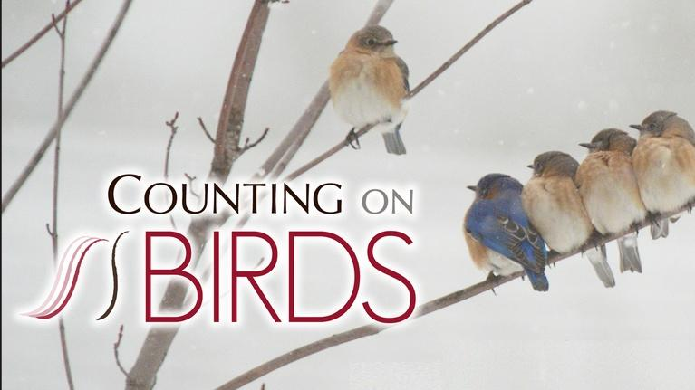 Counting On Birds: Counting On Birds