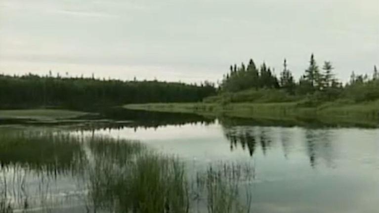NatureWorks: Habitat
