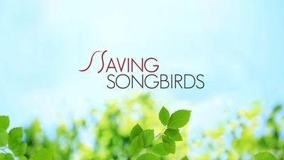 Saving Songbirds | Saving Songbirds
